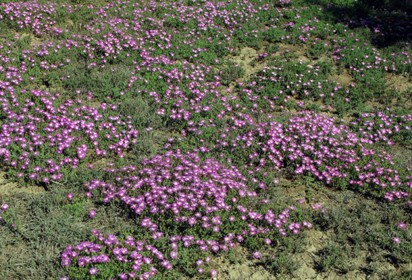 Wild flowers near the golf course