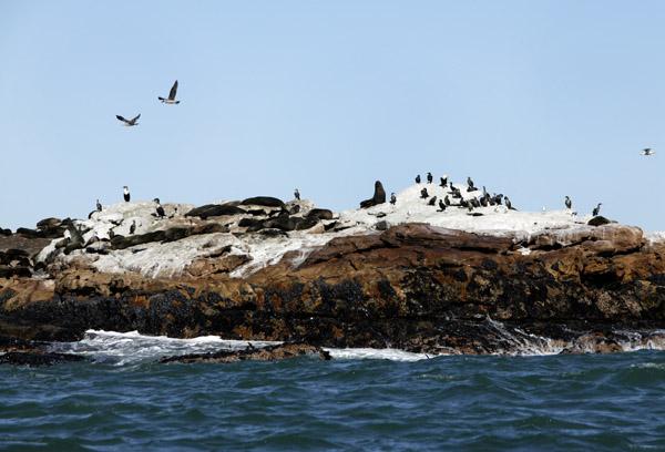 Seal Island.