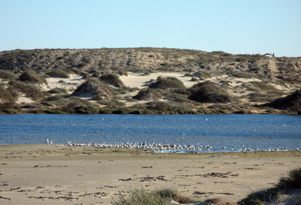 Abundant birdlife at the Buffels River estuary at Kleinzee.