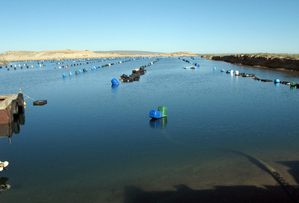 The oyster farm of Kleinzee Mariculture