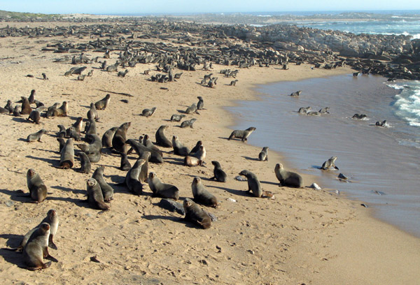 The seal colony.