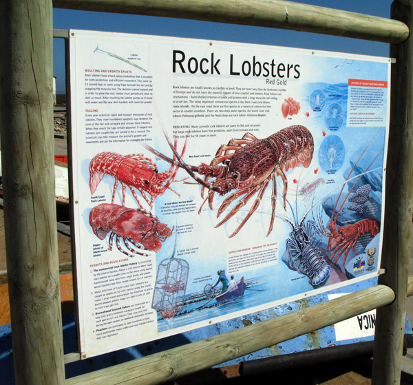 Info on crayfish/rocklobster.
