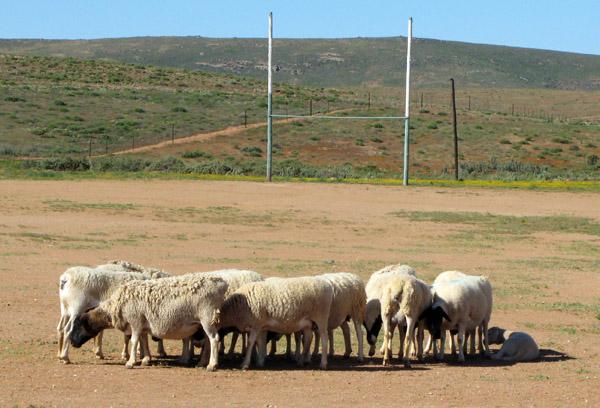 Soebatsfontein rugby field.