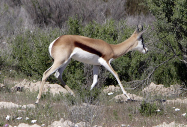 I Did not catch any fish but was lucky enough to get this photo of a Springbok.