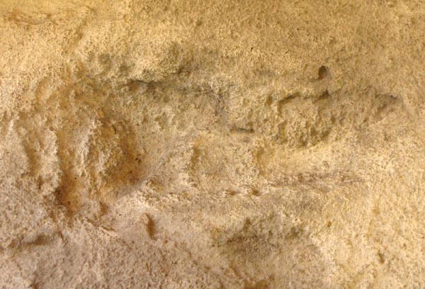 "Close-up of ""Eve's Footprint""."