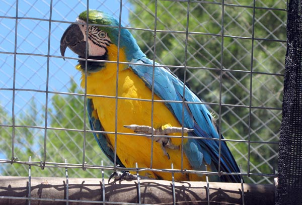 One of the many colourful birds that can be viewed at the back.