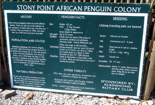 Info on Stony Point Penguins.