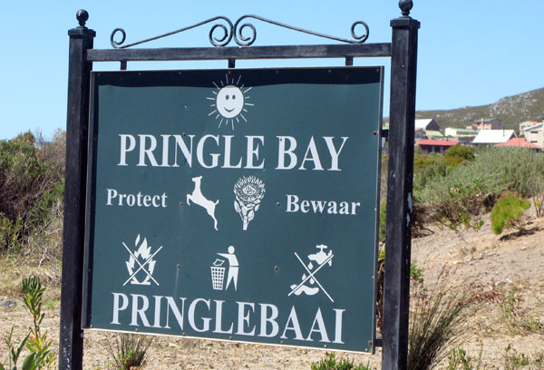 Welcome to Pringle Bay.