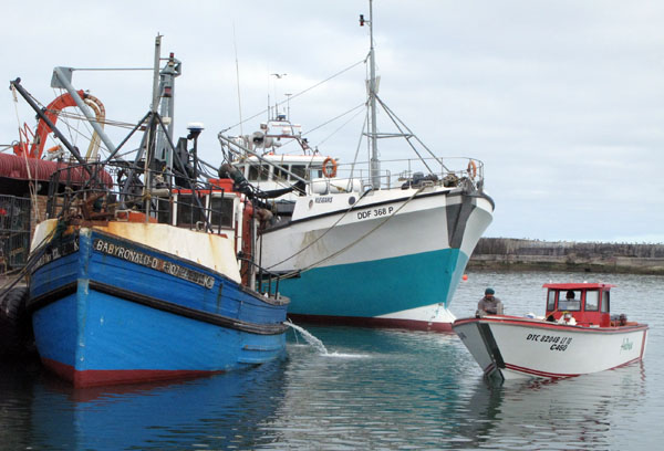 Some of the commercial fishing boats ready to put to sea.